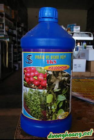 """Phân vi sinh vật TKS """"Pseudomonas Fluoresce"""", đối kháng vi khuẩn, nấm gây bệnh ở rễ thân, phòng bệnh chết nhanh, chết chậm, bệnh héo rũ, héo tươi, sầu ruột."""