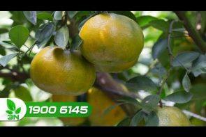 khắc phục nứt trái trên cam quýt